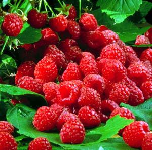 external image raspberries.jpg